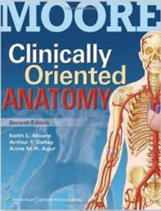 clinically oriented anatomy pdf