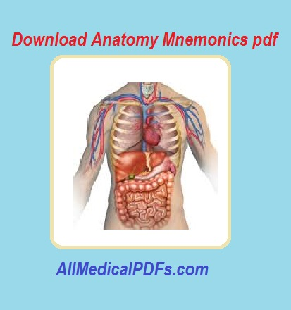 Netters Clinical Anatomy Pdf