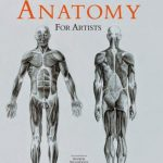 Human Anatomy For The Artist Pdf Free Download
