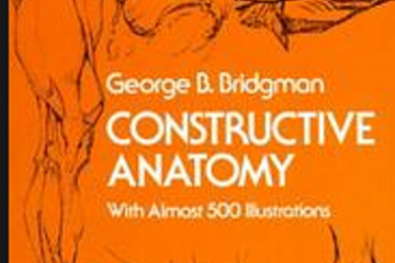 Constructive Anatomy Pdf