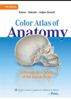 Anatomy Atlas Pdf