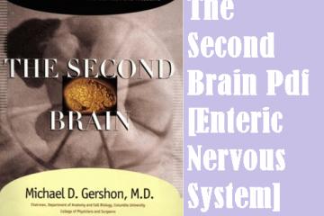 The Second Brain Pdf